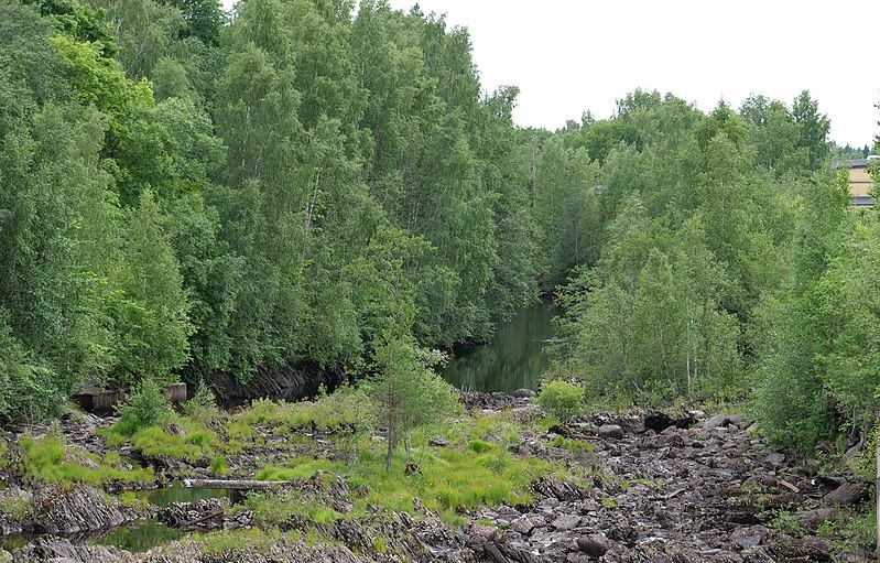 Träd längs Svartälvens kanter i Hällefors kommun